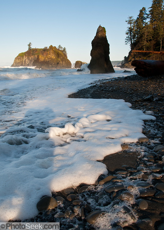 Sea stacks, surf, coastal forest at Ruby Beach, Olympic National Park, Washington, USA. Sunrise casts long shadows on the foamy surf and pebbled beach.