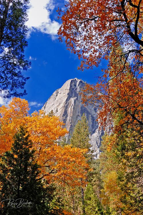 Fall color under the Washington Column, Yosemite Valley, Yosemite National Park, California