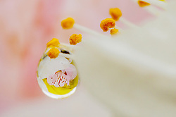 Photo taken on April 11, 2016 shows a raindrop on peach blossom in Nanhu Wetland Park in Hohhot, north China's Inner Mongolia Autonomous Region. EXPA Pictures © 2016, PhotoCredit: EXPA/ Photoshot/ Ding Genhou<br /> <br /> *****ATTENTION - for AUT, SLO, CRO, SRB, BIH, MAZ, SUI only*****
