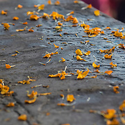Marigold petals from Hindu rituals line the stone steps on the banks of the Ganges River at Dr. Rajendra Prasad Ghat, Varanasi, Uttar Pradesh, India.