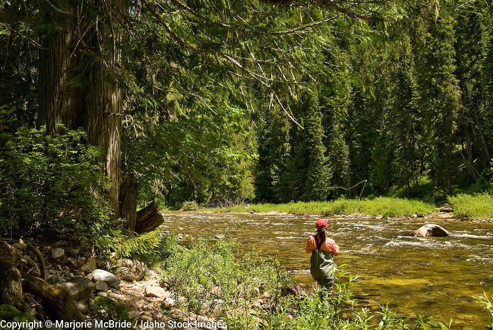 Women fly fishing beside large Cedar trees on the Lochsa river in the Clearwater National Forest, Idaho.  Model Release