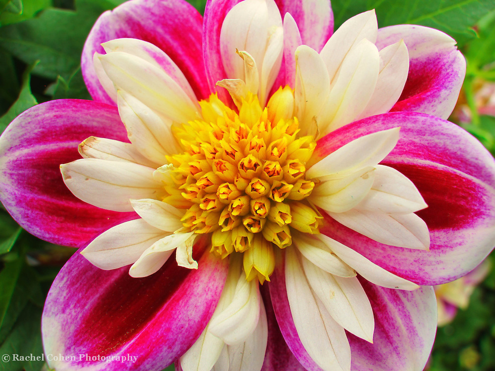 &quot;The Beauty Within&quot;<br />