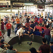 CHIANG MAI - FEB 26 2006: The matches are held in all manner of buildings, from shanty shacks to upscale arenas. In the larger venues, there are often several fights taking place at once, with the larger purse competitions taking place under stadium seating and a flurry of bets. Bird Flu caused the banning of cock fights in 2005, but a persistent movement of Thai's claiming the social significance of the sport and a reduction in Bird Flu cases has allowed the fights to resume. (Photo by Logan Mock-Bunting)