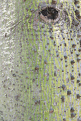 detail of a colorful tree trunk in Miami Beach, Florida