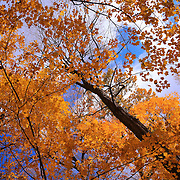"""Royal Gold and Blue""<br />