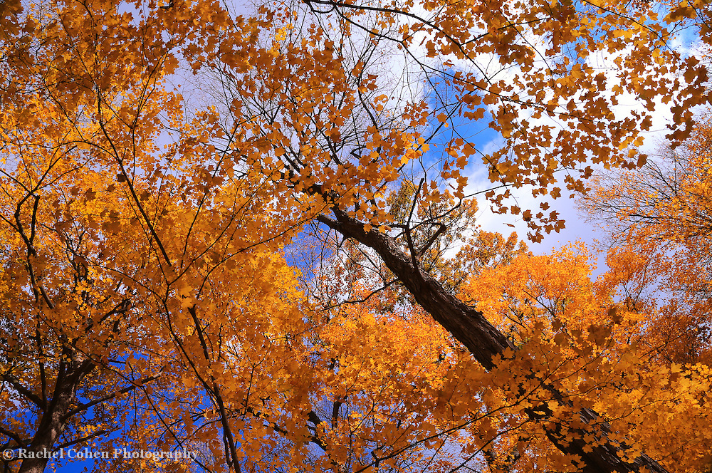 &quot;Royal Gold and Blue&quot;<br />