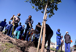 South Africa - Cape Town - 15-09- 2020- City of Cape Town planting trees in Gugulethu. Arbor September is Arbor and also  is also heritage month Photographer AYanda Ndamane/African News Agency(ANA)