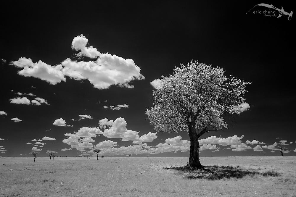 Infrared plains. Serengeti, Tanzania.
