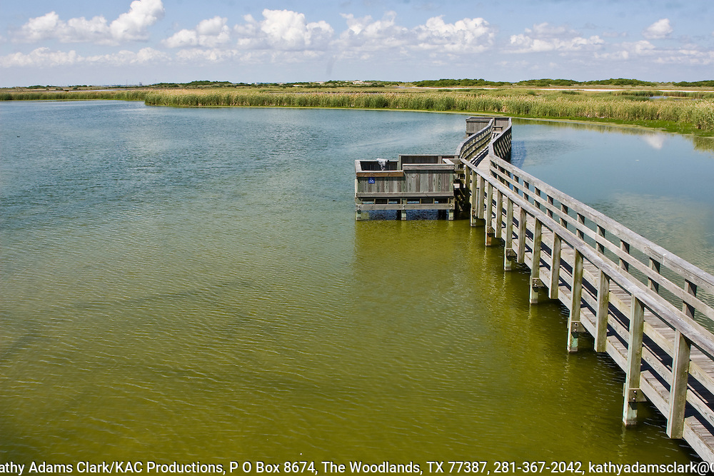 Port Aransas Birding Center on Ross Avenue  is a popular birding destination in Port Aransas, Texas because the boardwalk allows visitors to see birds and wildlife that live around the freshwater pond.