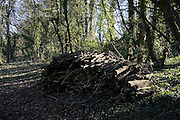 Pile of wood in forest clearing , Oxfordshire, United Kingdom.