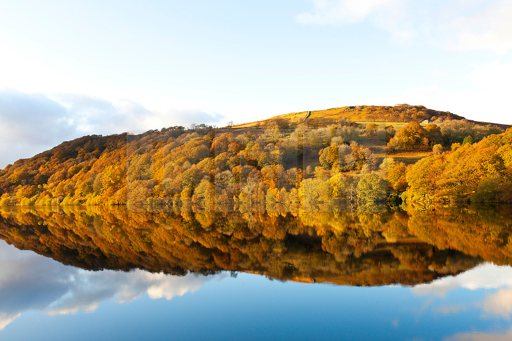 © Licensed to London News Pictures. 07/11/2019. Rhayader, Powys, Wales, UK. Beautiful autumnal colours are seen at the Elan Valley reservoir complex near Rhayader in Powys, UK. Photo credit: Graham M. Lawrence/LNP