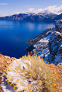 Rabbit Brush (Chrysothamnus nauseosus) and Crater Lake in winter (Deepest lake in the US) Crater Lake National Park, Oregon