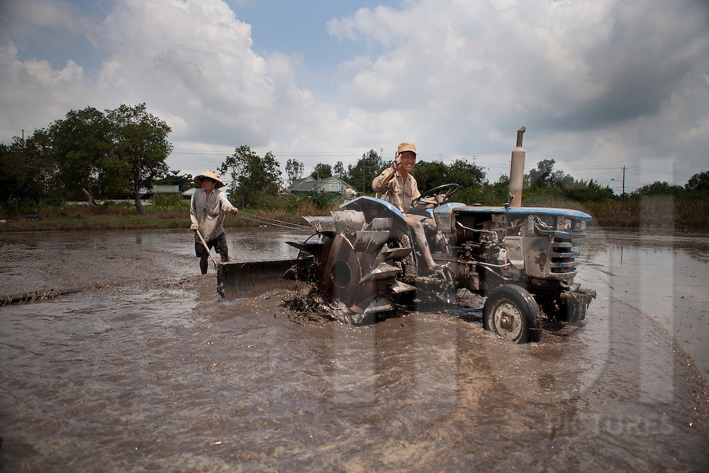 Vietnamese agricultors men working in a rice field helped by a tractor. Tay Ninh Province, Vietnam, Asia