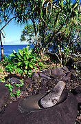 salt collector, Maui, Hawaii<br />
