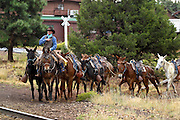 07 SEPTEMBER 2002 - GRAND CANYON NATIONAL PARK, ARIZONA, USA:  Ken Bowser, a wrangler at the Grand Canyon National Park, leads a mule train to the stone corral near the Bright Angle Lodge for tourists to ride into the Grand Canyon, Saturday, Sept. 7. The mule rides into the canyon one of the most popular activities at the Park. There are about 150 mules, 11 wranglers, 2 farriers and a saddle maker working in the park. On any given day about 80 mules are in the canyon hauling people or packing supplies into the inner canyon..PHOTO BY JACK KURTZ