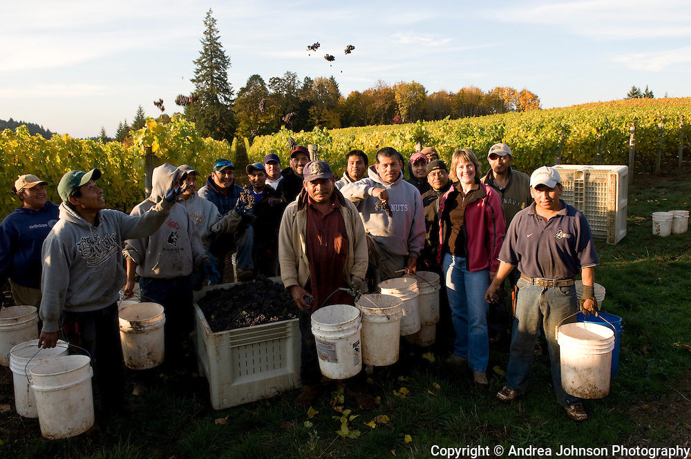 Crew celebrates end of harvest at Revana Vineyard, Dundee Hills, Willamette Valley, Oregon