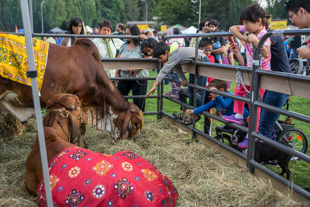 Sacred Cows @ Flavors of India Festival, Bellevue