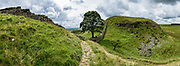 Sycamore Gap. Hadrian's Wall (Latin: Vallum Aelium) at Steel Rigg, England, United Kingdom, Europe. As the Roman Empire's largest artifact, Hadrian's Wall runs 117.5 kilometres (73.0 miles) across northern England, from the banks of River Tyne near the North Sea to Solway Firth on the Irish Sea. Much of the wall still stands and can be walked along the adjoining Hadrian's Wall Path. Within the Roman province of Britannia, it defended the northwest frontier of the Roman Empire for nearly 300 years. It was built by the Roman army on the orders of the emperor Hadrian in the 6 years following his visit to Britain in AD 122. From north side to south, the wall comprised a ditch, stone wall, military way and vallum (another ditch with adjoining mounds). The wall featured milecastles with two turrets in between and a fort about every five Roman miles. Hadrian's Wall is honored as a World Heritage Site. The wall lies entirely within England, and is unrelated to the Scottish border, which lies north of the wall at distances varying from 1-109 kilometers (0.6-68 miles) away. This image was stitched from multiple overlapping photos.