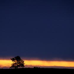 Wind Cave National Park, SD.Ponderosa Pine, Pinus ponderosa, silhouette.