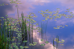 Golden pond in northern Wisconsin.