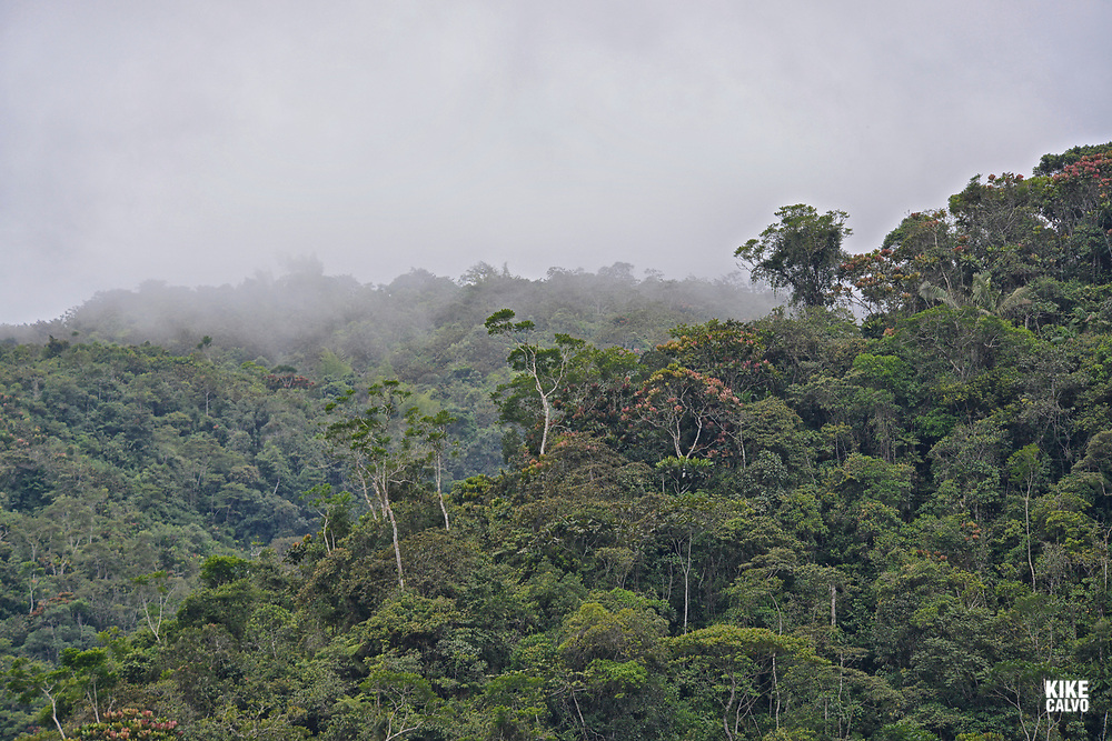 Subtropical Cloud Forest, also referred to as Subandean Forest