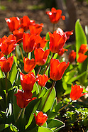 20070402 Spring Blooms