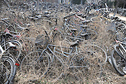 JINAN, CHINA - MARCH 17: (CHINA OUT) <br /> <br /> Discarded bicycles are thrown together haphazardly in a college on March 17, 2016 in Jinan, Shandong Province of China. Most of those fold, rusty and broken bicycles are from students who graduated and left them in school. <br /> ©Exclusivepix Media