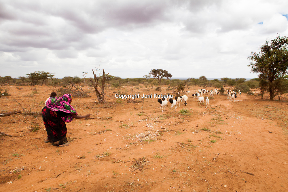A young woman calls her herd of sheep to a water source built by Mercy Corps in Ararso, Ethiopia