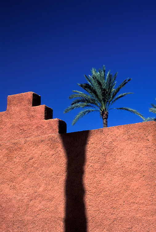 Palm tree, Marrakesh, Morocco