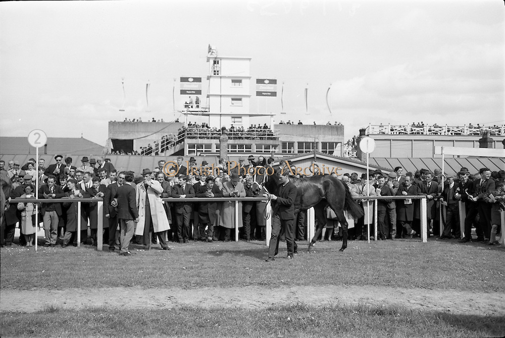 """08/05/1965<br /> 05/08/1965<br /> 08 May 1965<br /> The 1965 Gold Flake Meeting at Leopardstown Racecourse, Co. Dublin. Image shows Mr A.J. Russell's """"Scotch Corner"""", winner of the  the Bristol Handicap race."""