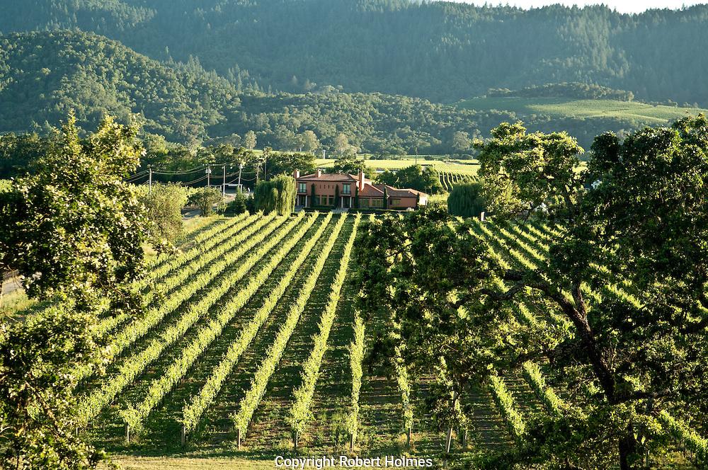 Cardinale vineyards, Oakville, NApa Valley, California
