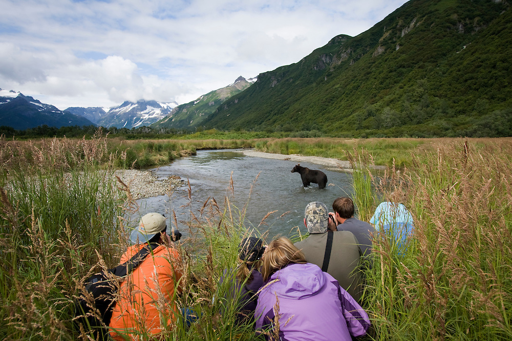 USA, Alaska, Katmai National Park, Kukak Bay, Group of tourists watch Brown Bear (Ursus arctos) in stream on summer afternoon