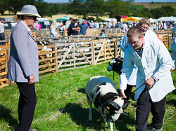 © Licensed to London News Pictures.12/08/15<br /> Danby, UK. <br /> <br /> An official observes as sheep are led past her during judging at the 155th Danby Agricultural Show in the Esk Valley in North Yorkshire. <br /> <br /> The popular agricultural show attracts competitors and visitors from all over the surrounding area to this annual showcase of country life. <br /> <br /> Photo credit : Ian Forsyth/LNP