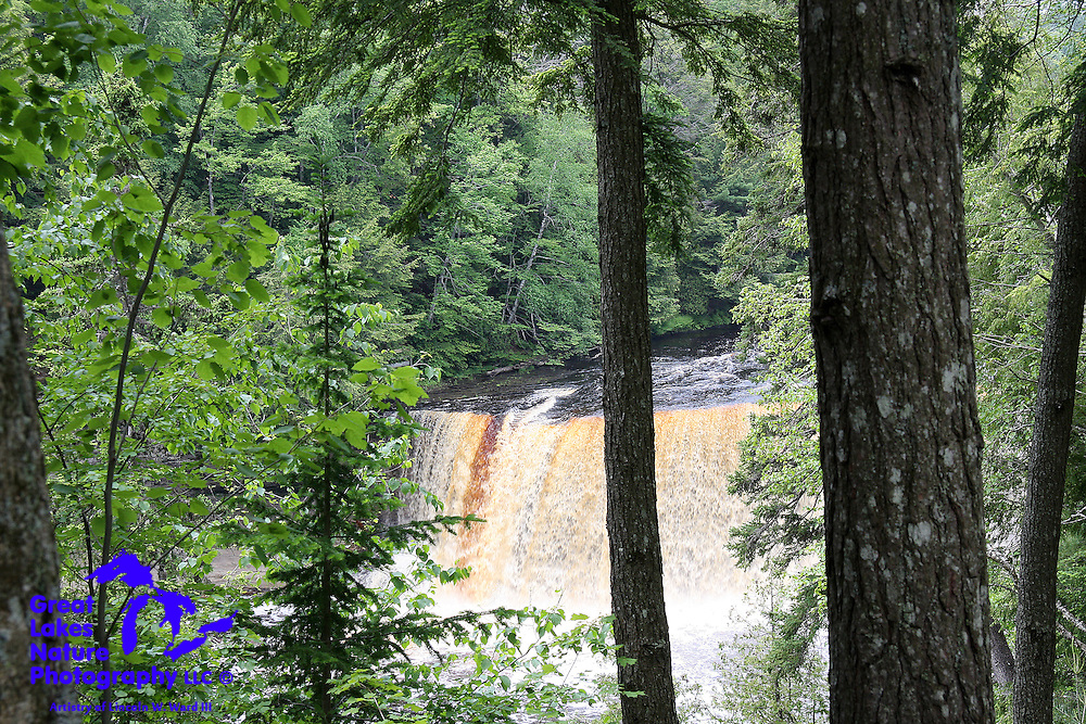 The mighty Upper Tahquamenon Falls in Chippewa County, Michigan, is 200 feet wide and 50 feet in height. This is my favorite vantage point for enjoying the beauty of the falls.