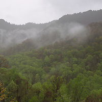 Foggy Chimney Tops during a rain storm. Great Smoky Mountains National Park