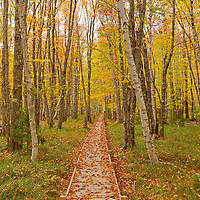 Jessop Path in Acadia National Park Maine displaying fall color.