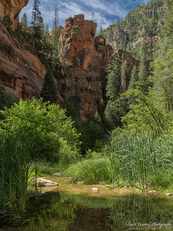 As the sun rose high into the sky late in the morning, this was the final image made during a wonderful morning hike in West Fork, Oak Creek Canyon