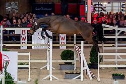057, Risk De La Liniere<br /> BWP Hengstenkeuring -  Lier 2020<br /> © Hippo Foto - Dirk Caremans<br />  17/01/2020