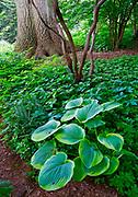 Mixed Flora, Pathway. Chanticleer Gardens, Wayne, PA