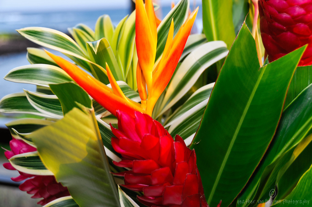 tropical flowers floral