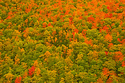 Acadian forest in autumn foliage <br />