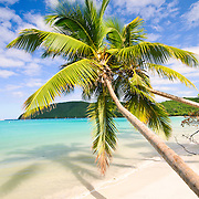 Palm trees hang over the beach at the beautiful sandy beach of Maho Bay on the north shore of St. John in the US Virgin Islands in the Caribbean.