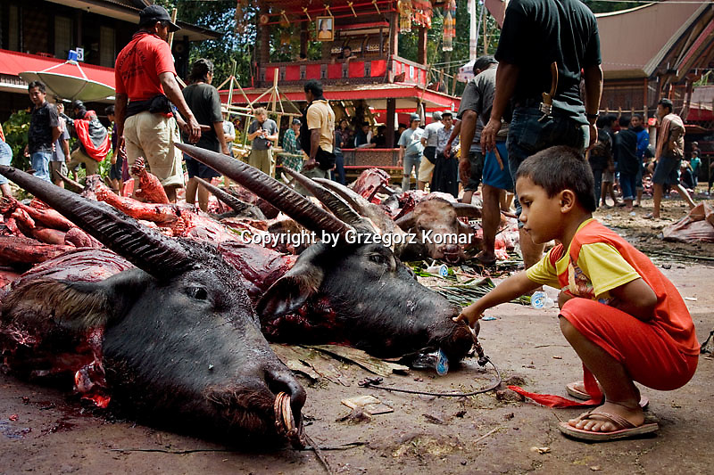Indonesia Rituals Weddings And Funerals: Grzegorz Komar Photography