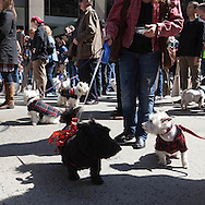 New York Tartan parade on six avenue, scotish celebration
