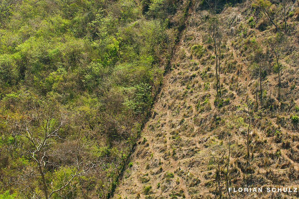 Deforestation and over-grazing is one of the main reasons for habitat loss and habitat degradation in the Sierra Madre, Chiapas. Mexico.