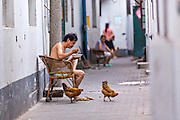 Man and chickens along an alley along Shantang canal in Suzhou, China.