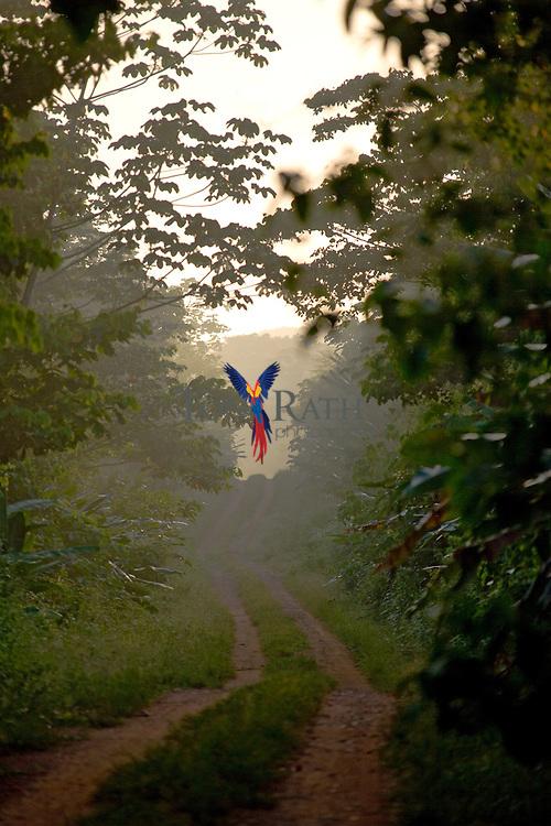 Entrance road into Mayflower National Park, Belize