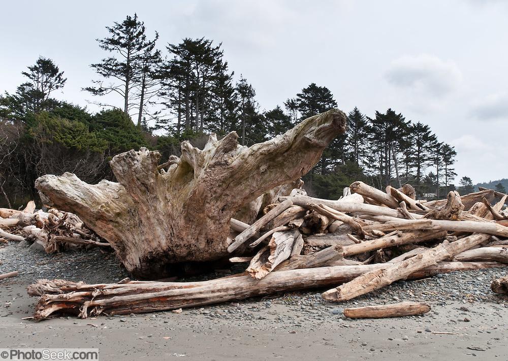 Driftwood, drift logs, drift stump at Kalaloch Beach, Olympic National Park Washington, USA