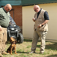 Jimmy Wiygul, K-9 handler for at the Calhoun County Sheriff's department and Sheriff Greg Pollan work with Duke the Calhoun County Sheriff's department new Bloodhound puppy outside of the jail on Friday.
