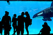 Visitors watch Killer Whales swimming in a tank from an underwater viewing area at Seaworld in San Diego, CA on Wednesday, July 17, 2013.